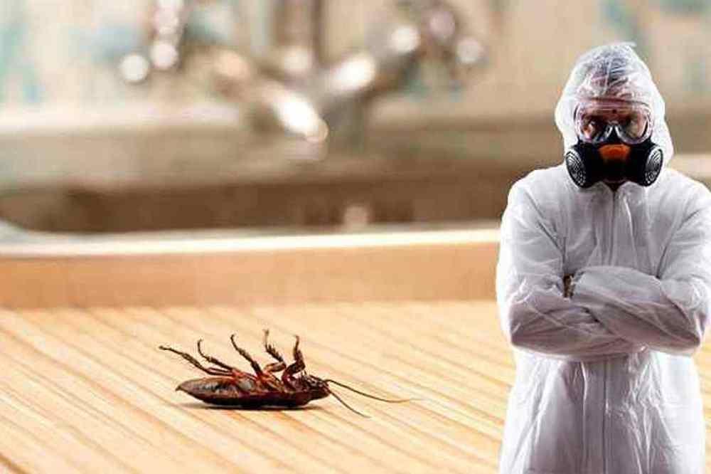 Дезинфекция тараканов в Алматы: с чего начать?